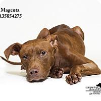 Adopt A Pet :: Magenta - Baton Rouge, LA