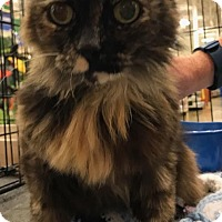 Adopt A Pet :: Monena - Sacramento, CA