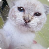 Adopt A Pet :: Birdie - Coos Bay, OR