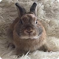 Adopt A Pet :: Quiche - Watauga, TX