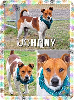 Terrier (Unknown Type, Small) Mix Dog for adoption in Corpus Christi, Texas - Johnny