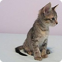 Adopt A Pet :: Elizabeth - Mobile, AL