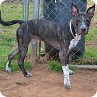 Adopt A Pet :: Magic - Athens, GA