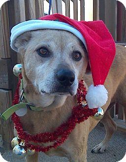 Labrador Retriever Mix Dog for adoption in Manhattan, Kansas - Olivia