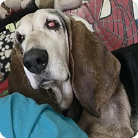 Adopt A Pet :: Miracle - Acton, CA