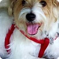 Adopt A Pet :: DEVLIN - Terra Ceia, FL