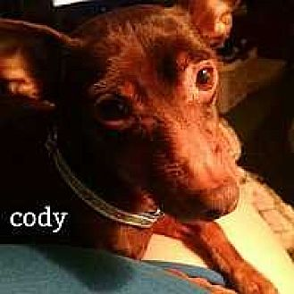 Miniature Pinscher Dog for adoption in Columbus, Ohio - Cody