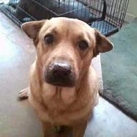 Adopt A Pet :: PEEWEE - Chandler, AZ