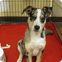 Adopt A Pet :: Sam - South Dennis, MA