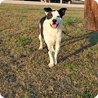 Adopt A Pet :: Lt. Dan-113007j - Tupelo, MS