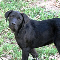 Adopt A Pet :: DECLAN - Carrollton, TX