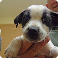 Adopt A Pet :: Skid - Tampa, FL