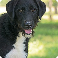 Adopt A Pet :: *Raven - PENDING - Westport, CT