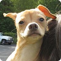 Adopt A Pet :: Rhesus - Reeds Spring, MO