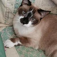 Adopt A Pet :: May-ling - URGENT NEED - Yorba Linda, CA