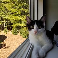 Adopt A Pet :: Zebra Cake - Apex, NC