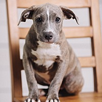 Adopt A Pet :: Chashew - Portland, OR