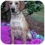 Photo 2 - Beagle Mix Dog for adoption in Mobile, Alabama - Benson