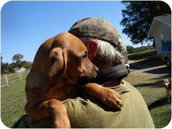 Labrador Retriever Mix Puppy for adoption in Thomaston, Georgia - Hank