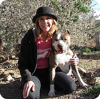 American Staffordshire Terrier Mix Dog for adoption in Toluca Lake, California - Sable