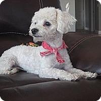 Adopt A Pet :: **ABBIE** - Stockton, CA