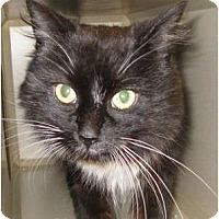 Adopt A Pet :: Tuni - Mesa, AZ