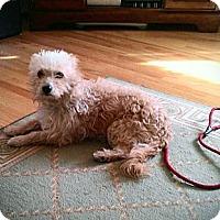 Adopt A Pet :: Mango - Providence, RI