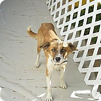 Adopt A Pet :: Clementine - Adoption Pending - Vancouver, BC