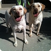 Adopt A Pet :: Kimber and Kane - Foster, RI