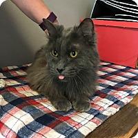 Adopt A Pet :: Sterling - Barrington Hills, IL