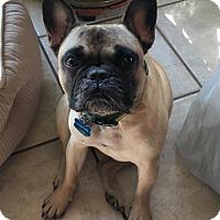 Adopt A Pet :: Chester - Katy, TX