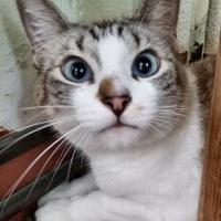 Adopt A Pet :: G. G. - Nogales, AZ
