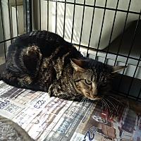 Adopt A Pet :: Timmy - North Kingstown, RI