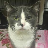 Adopt A Pet :: Sassy - Twinsburg, OH