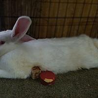 Adopt A Pet :: Polar - Williston, FL