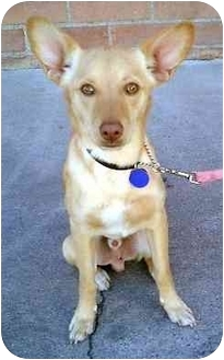 Hound (Unknown Type) Mix Dog for adoption in Los Angeles, California - Troy