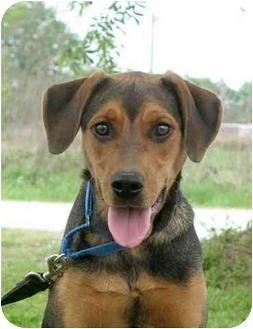 Hound (Unknown Type) Mix Dog for adoption in Portsmouth, Rhode Island - Shawna