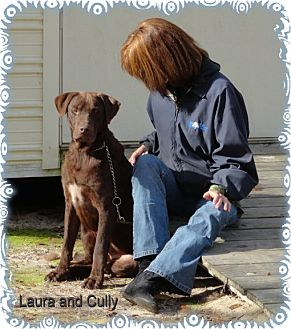 Labrador Retriever Mix Dog for adoption in Ozark, Alabama - Cully