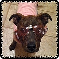 Adopt A Pet :: Delilah - Concord, CA