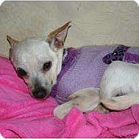 Adopt A Pet :: Whitley - Westfield, IN