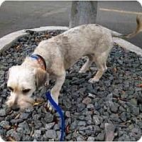 Adopt A Pet :: Ramona - Albuquerque, NM