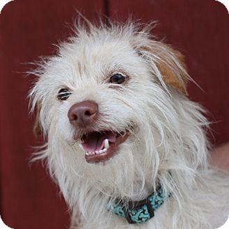 Terrier (Unknown Type, Small) Mix Dog for adoption in Lyons, New York - Daisy