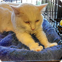 Adopt A Pet :: social, white beauty! - Scottsdale, AZ