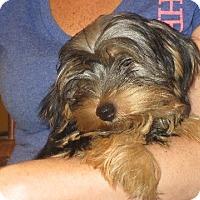 Adopt A Pet :: Rory - Salem, NH
