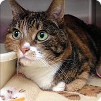 Adopt A Pet :: Marley - Newport Beach, CA