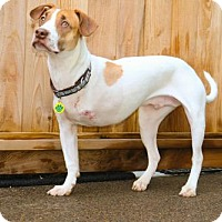 Adopt A Pet :: Roo - Eugene, OR