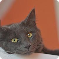 Adopt A Pet :: Jezibaba - Brooklyn, NY