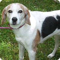 Adopt A Pet :: Chrissy - Mineral, VA