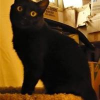 Adopt A Pet :: Douglas Fur - Saskatoon, SK