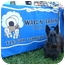 Photo 3 - Scottie, Scottish Terrier Dog for adoption in Omaha, Nebraska - Maximus-*Snazzy Senior